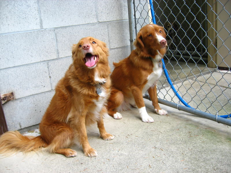 53Tollers
