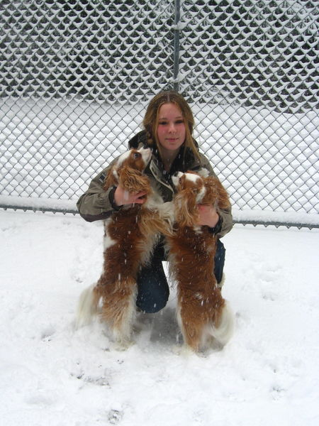 59Two Cavaliers in Snow
