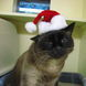 44Cat in Christmas Hat